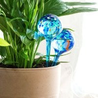 Automatic Watering Globes (Pack of 2) 1